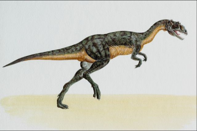 Différents dinosaures